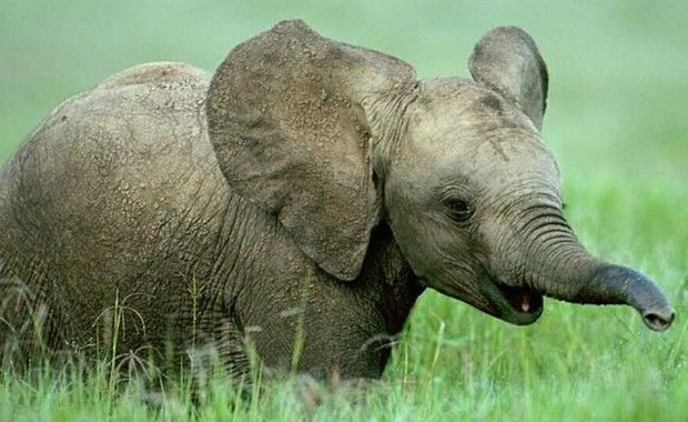 cute animals elephant