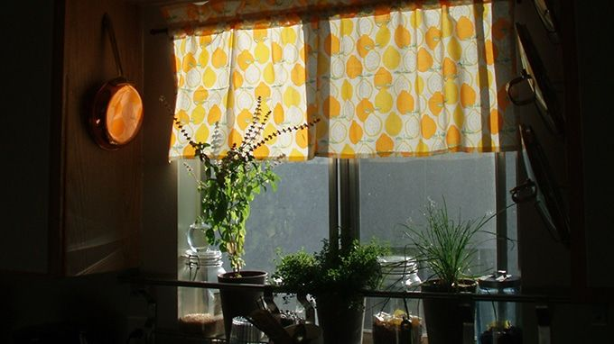20 tips to make indoor gardening successful lifedaily - Houseplants thrive low light youre window sill ...