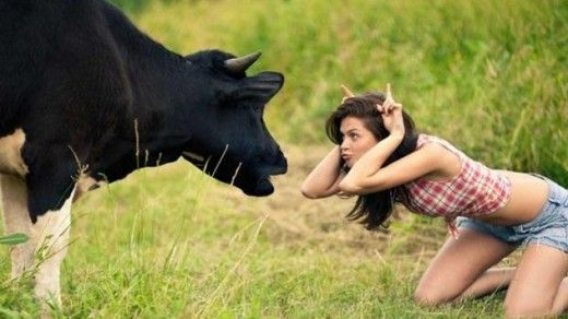 funny animals facts cow