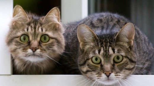22 Of  The Most Interesting Random Facts About Cats