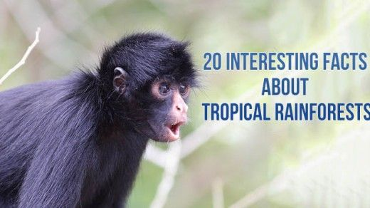 20 Interesting Facts About Tropical Rainforests
