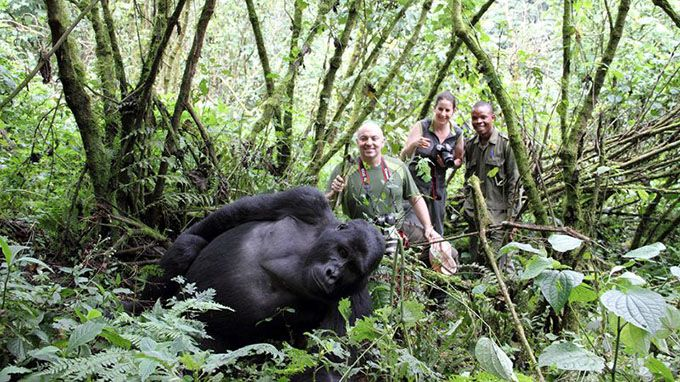Gorilla Safari in Bwindi Impenetrable Forest