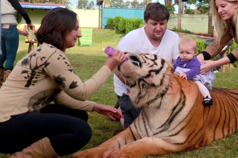 Living With Tigers: Family Shares Home With Pet Tigers