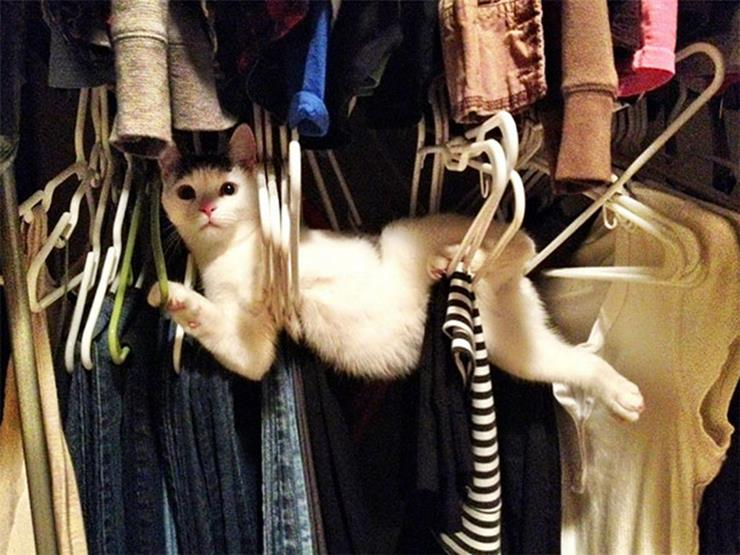 Cat caught in Clothes Hangers