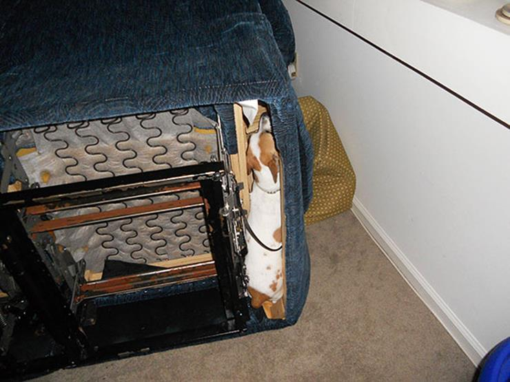 Dog caught under chair