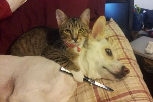 18 Dogs VS Cats Images To Prove Who's Boss