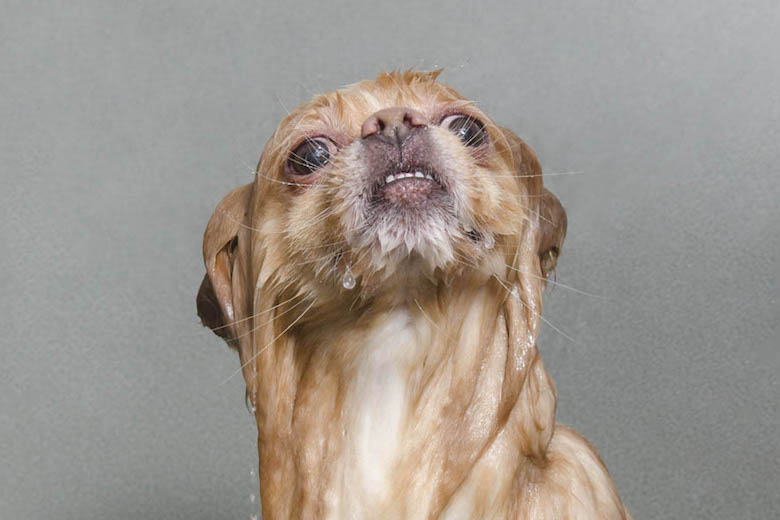 Photographer Takes Pictures Of Wet Dogs At The Groomer And Creates Hilarious Works Of Art
