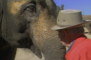 He Saved This Circus Elephant In 1955. Decades Later, Their Reunion Gave Us Chills