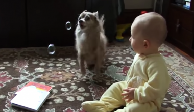 Adorable Baby and Chihuahua Have Hysterical First Reactions To Bubbles