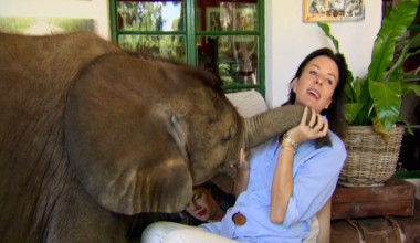 Abandoned Baby Elephant Refuses To Leave Her New Mom's Side