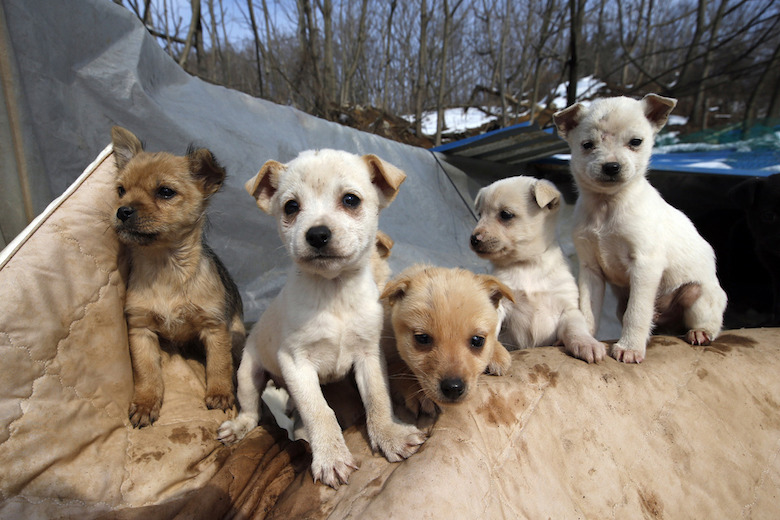 South Korean Woman Rescues Hundreds Of Puppies From Becoming Someone's Next Meal