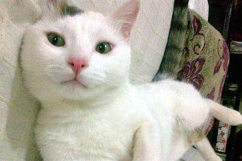 Heroic Cat Saves Woman In Turkey From A Sexual Attacker